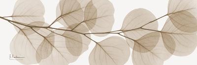 https://imgc.artprintimages.com/img/print/sepia-kaluptos-eucalyptus_u-l-pyjowq0.jpg?p=0