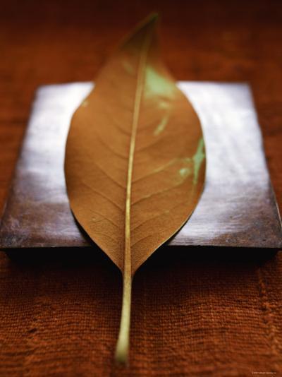 Sepia Leaf--Photo