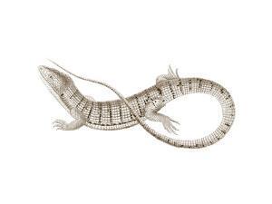 Sepia Lizard I