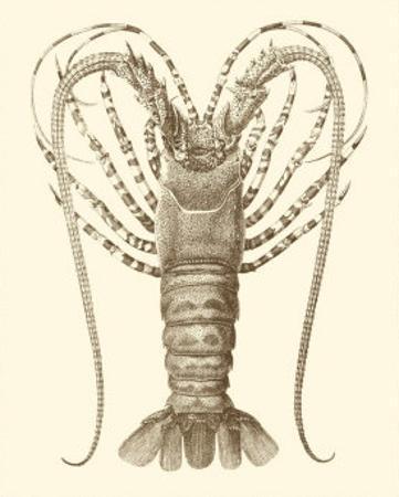 Sepia Lobster I