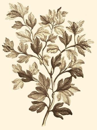 https://imgc.artprintimages.com/img/print/sepia-munting-foliage-i_u-l-p8l2pn0.jpg?p=0