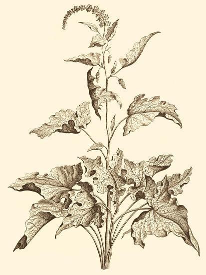 Sepia Munting Foliage II-Abraham Munting-Art Print