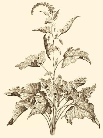 https://imgc.artprintimages.com/img/print/sepia-munting-foliage-ii_u-l-p8l2qh0.jpg?p=0