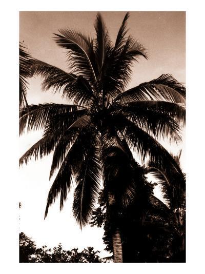 Sepia Palm 4-Porter Design-Premium Giclee Print