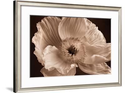 Sepia Poppy I-Cora Niele-Framed Photographic Print