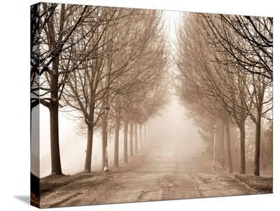 Sepia Trees-Tatiana Lopatina-Stretched Canvas Print