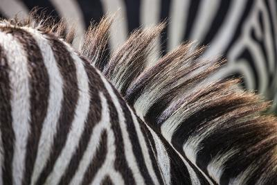 Sepilok Orangutan Rehabilitation Centre, Malaysia Ngorongoro Crater, Tanzania Mt Kinabalu, Malaysia-Karine Aigner-Photographic Print
