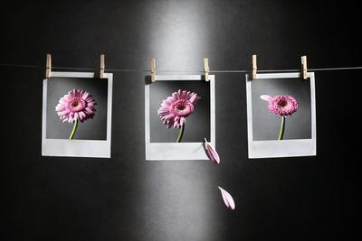 https://imgc.artprintimages.com/img/print/september-is-here_u-l-pu1aks0.jpg?p=0