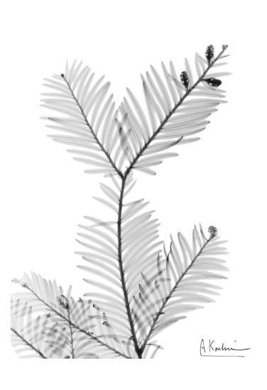 Sequoia Branch-Albert Koetsier-Art Print
