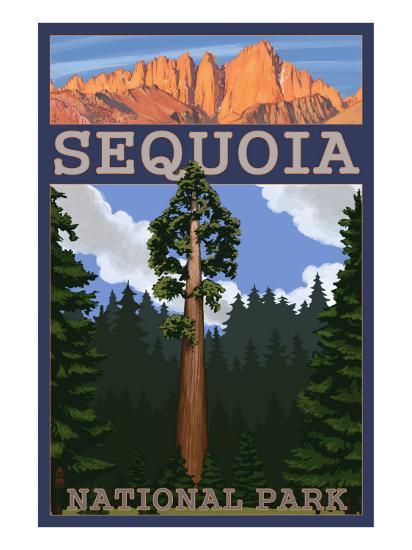 Sequoia Nat'l Park - Sequoia Tree and Palisades - Lp Poster, c.2009-Lantern Press-Art Print
