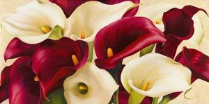Calla Composition by Serena Biffi