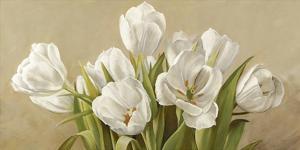 Tulipani bianchi by Serena Biffi