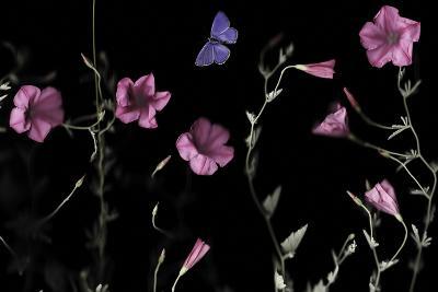 Serene Flutter-Wild Wonders of Europe-Giclee Print