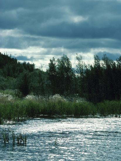 Serene Lake and Forest--Photographic Print