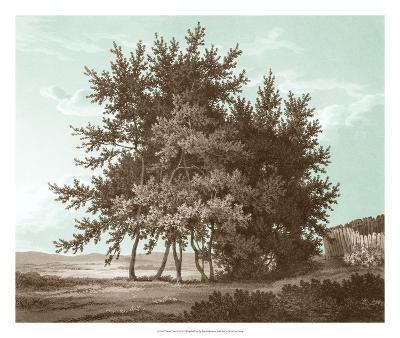 Serene Trees IV-Edward Kennion-Giclee Print