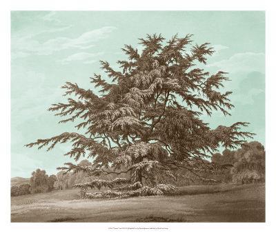 Serene Trees VI-Edward Kennion-Giclee Print