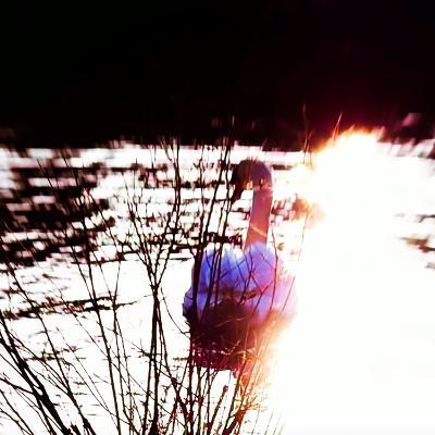 Serenity, 2017, (Manipulated Photography)-Helen White-Photographic Print