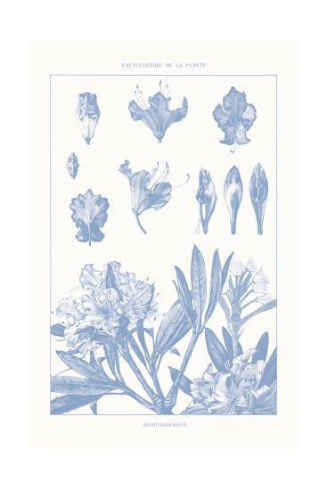 Serenity Rhododendron on White-Wild Apple Portfolio-Art Print