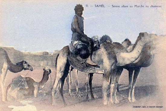 Serere, the Sahel, Senegal, 20th Century- Albaret-Giclee Print
