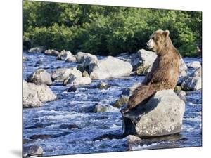 Brown Bear (Ursus Arctos) Sitting on Rock in River, Kamchatka, Russia by Sergey Gorshkov/Minden Pictures