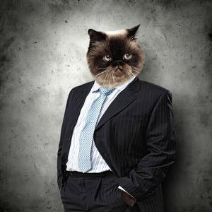 Funny Fluffy Cat In A Business Suit Businessman. Collage by Sergey Nivens