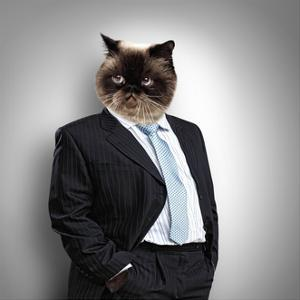 Funny Fluffy Cat in a Business Suit by Sergey Nivens