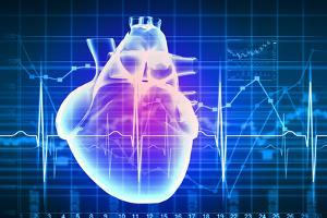 Human Heart with Cardiogram by Sergey Nivens
