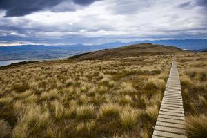 The Boardwalk on the Kepler Trak in Fiordland National Park in New Zealand's South Island by Sergio Ballivian