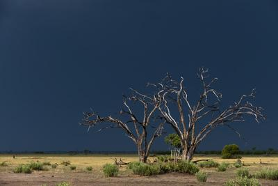 A Dark Rainstorm Approaching the Savute Marsh