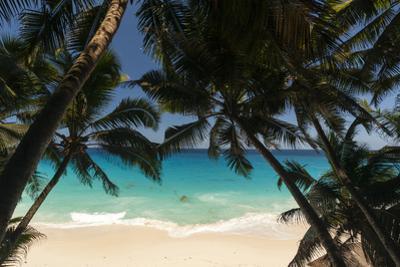 Anse Maquereau, Fregate Island, Seychelles by Sergio Pitamitz