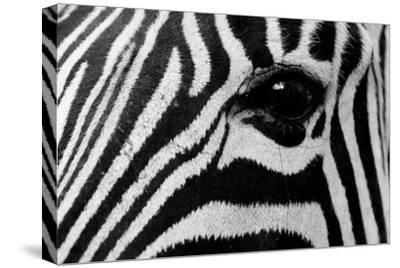 Close Up of a Burchell's Zebra Eye, Equus Burchelli