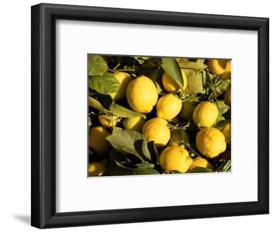 Close-Up of Lemons in the Market, Menton, Provence, Cote d'Azur, France