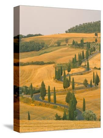 Cypress Trees Along Rural Road Near Pienza, Val D'Orica, Siena Province, Tuscany, Italy, Europe
