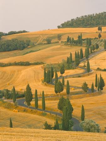 Cypress Trees Along Rural Road Near Pienza, Val D'Orica, Siena Province, Tuscany, Italy, Europe by Sergio Pitamitz