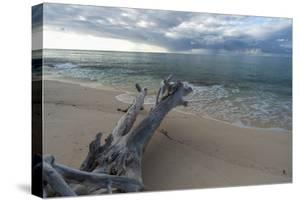 Denis Island, Seychelles by Sergio Pitamitz
