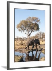 Elephant (Loxodonta Africana), Chobe National Park, Botswana, Africa by Sergio Pitamitz