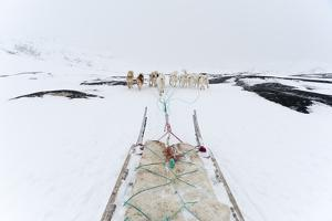 Greenland Dogs Pulling a Dog Sled by Sergio Pitamitz