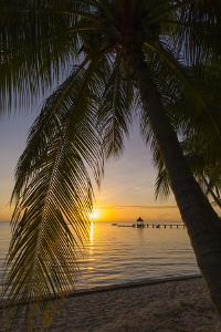 Over-The-Water Bungalows Framed by at Palm Tree at a Tropical Resort at Sunset by Sergio Pitamitz