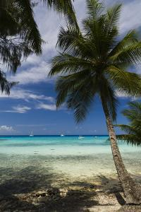 Small Boats Moored Off the Coast of a Palm Tree-Lined Tropical Beach by Sergio Pitamitz