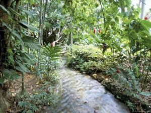 Tropical Forest, Shaw Park, Ocho Rios, Jamaica, West Indies, Central America by Sergio Pitamitz