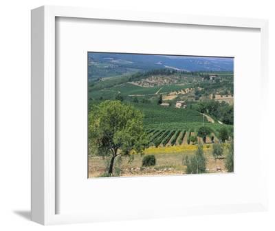 Vineyards, Chianti, Tuscany, Italy, Europe