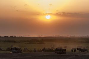 Wildebeest and Common Zebras, Equus Quagga, Grazing During Sunset by Sergio Pitamitz