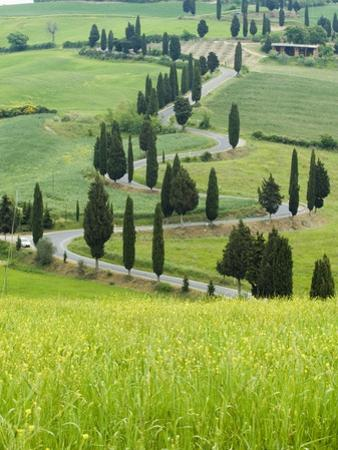 Winding Country Road by Sergio Pitamitz