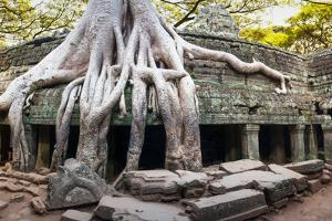 Angkor Wat Cambodia. Ta Prom Khmer Ancient Buddhist Temple in Jungle Forest. Famous Landmark, Place by SergWSQ
