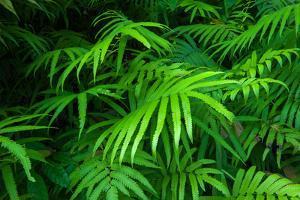 Ferns Leaves Green Foliage Tropical Background by SergWSQ