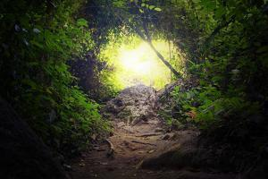 Natural Tunnel in Tropical Jungle Forest. Road Path Way through Lush, Foliage and Trees of Evergree by SergWSQ
