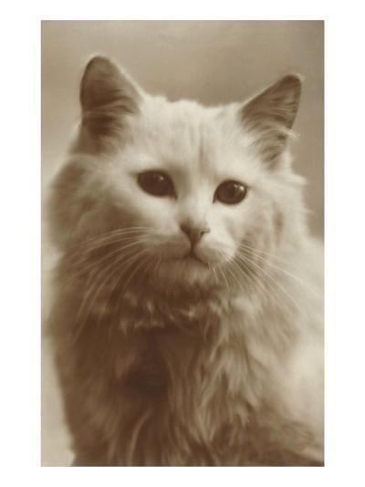 Serious Cat--Art Print