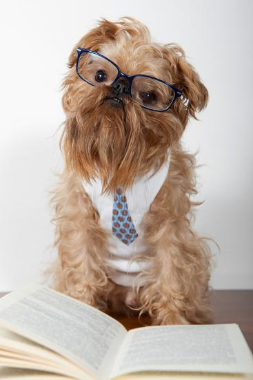 Serious Dog In Glasses-Okssi-Photographic Print