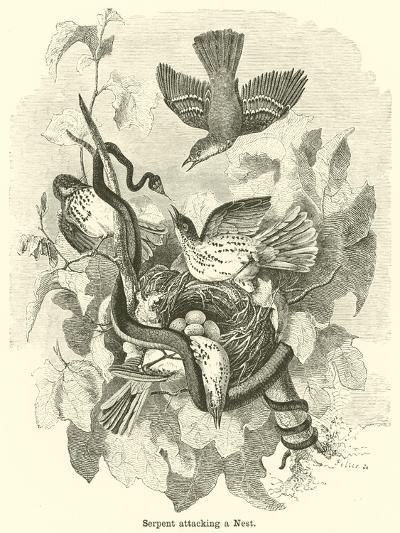 Serpent Attacking a Nest--Giclee Print