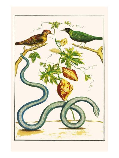 Serpents and Birds-Albertus Seba-Art Print